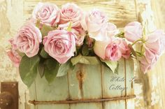 Ice Cream And Roses - White Lace Cottage