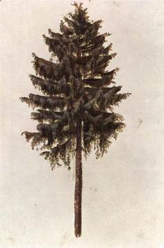 Pine - Alberto Durero