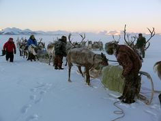 When we travelled during the lowest temperatures, around -55 degrees Celsius and possibly more, we stopped often for the herders to have a smoke, us to chew a Snickers and to clean the sleds. Reindeer liked the breaks.  Read more at http://www.outwildtv.com/expeditions/frozen-frontier/posts/inner-wolf