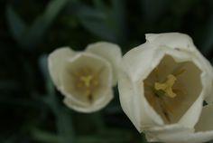 Grazzano Visconti #flower