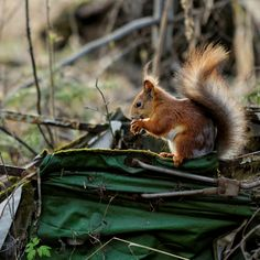 squirrel by Artem Kreo on 500px
