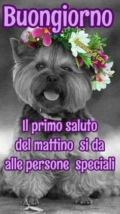 Favorito Tutorial and Ideas Good Morning Messages, Good Morning Good Night, Good Morning Wishes, Good Morning Images, Day For Night, Italian Memes, Italian Quotes, Emoji Images, Italian Phrases