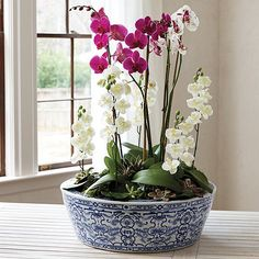 Our Blue and White Vases celebrate the traditional look of blue and white porcelain, which dates back to the century. Orchid Planters, White Planters, Outdoor Planters, Outdoor Decor, Orchid Centerpieces, Orchid Arrangements, Blue And White Vase, White Vases, Chinoiserie Motifs