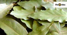 Vavrín, alebo iným názvom bobkový list, sa u nás používa ako korenie najmä do kyslejších jedál. Tieto nenápadné lístky však dokážu viac ako len ochutiť jedlo. Odvar z nich sa používa na detoxikáciu organizmu a zbavenie tela od prebytočných solí. Vyrobiť sa z neho dá aj olej, či obklad na reumu a boľavé kĺby. Poradíme vám ako si s ním zlepšiť zdravie. Plant Leaves, Plants, Syrup, Plant, Planets
