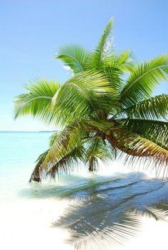 Beach Stuff, Tropical Beaches, Beach Landscape, Blue Lagoon, Summer Colors, Holiday Destinations, Beautiful Beaches, Summer Beach, Palm Trees
