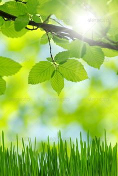 Realistic Graphic DOWNLOAD (.ai, .psd) :: http://realistic-graphics.xyz/pinterest-itmid-1007064733i.html ... green leaves ...  background, beautiful, beauty, clean, condition, forest, fresh, garden, green, healthy, leaves, maintained, nature, pattern, spring, summer, texture, tree  ... Realistic Photo Graphic Print Obejct Business Web Elements Illustration Design Templates ... DOWNLOAD :: http://realistic-graphics.xyz/pinterest-itmid-1007064733i.html