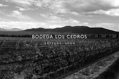 Bodega Los Cedros, represents a Mexican vineyard located in the mountains of Arteaga, Coahuila dedicated to the wine harvest since 2012. It originated motivated by the passion and dream of a family to produce high quality wines within a magical place, more than 100 years old named