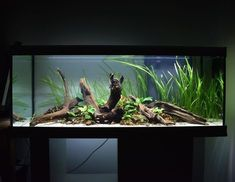 """360 Likes, 3 Comments - Jeppe (@scaperz) on Instagram: """"Full front view of the aqualantis tank at night time! - - -  #aqua #aquascape #aquarium #tank…"""" #AquariumAccessories"""