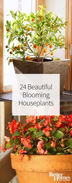 You'll definitely want to add these beautiful blooming houseplants to your home's decor. From African violet to hibiscus to a peace lily, these are our favorite flowers and plants to grow inside.