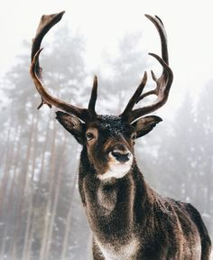 I like this animal photo because it has good contrast and the deer sticks out. Wild Life, Nature Animals, Animals And Pets, Cute Animals, Wild Animals, Pretty Animals, Animals In Snow, Baby Animals, Nature Nature
