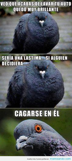 Memes Para Facebook en Español ->> MEMEando.com << - Page 18