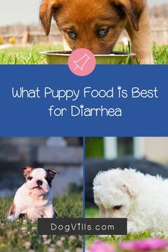 What puppy food is best for diarrhea?That question is far more common than you might think, especially considering the fact that puppies have sensitive tummies! Best Dog Food, Best Dogs, Puppy Food, Dog Food Recipes, Puppies, This Or That Questions, Animals, Cubs, Animales