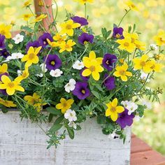 Trixi® 'Twinkle Star' - Annual Plants - Thompson & Morgan