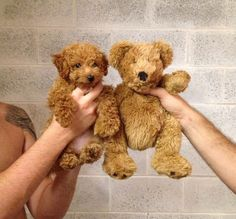 which is the teddy bear?