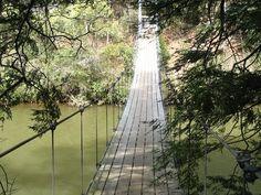 Swinging Bridge, Clear Creek, Winston County, AL