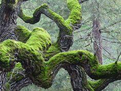 Twisted Tree and moss by dantecosplayer | Dante Miguel Salgado. Deviantart.com