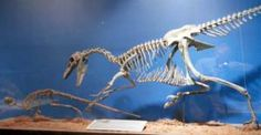 Ornithopod Pictures: Orodromeus