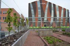 Hier zie je links een rij minitree appelbomen staan. Op het dak van het zlto gebouw in Den Bosch. Moestuinen op daken van bedrijven is helemaal hot. In de pauze naar boven om je eigen fruit en groente te plukken. www.minitree.nl