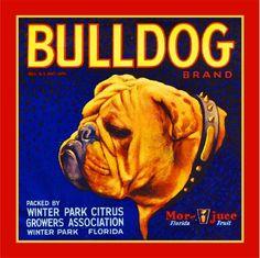 Winter Park Florida Bulldog Dog Orange Citrus Fruit Crate Label Art Print in Collectibles, Animals, Dogs, Bulldog, English Bulldog Vintage Labels, Vintage Ads, Vintage Gifts, Vintage Posters, Orange Crate Labels, Winter Park Florida, Vegetable Crates, Dachshund Funny, Thing 1
