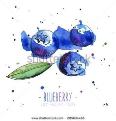 Watercolor blueberries with splashes in free style. Fresh and juicy colors. Hand drawn isolated on white background. Vector illustration - stock vector