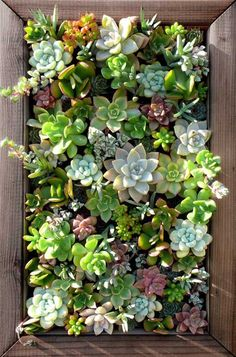 Succulents in a wooden frame -- hanging wall garden perfect for those lacking in a yard or floor space!
