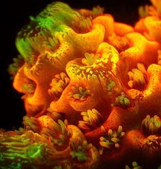 new research cats light on the beautiful colors of coral