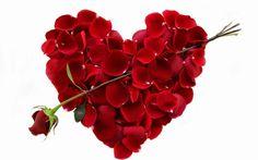 A Rose for Your Valentine 2015 desktop wallpaper
