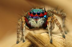 Rainbow Spider - World Photography Organisation