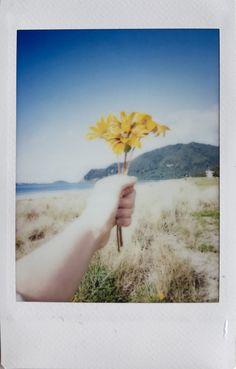 Beach flowers Polaroid