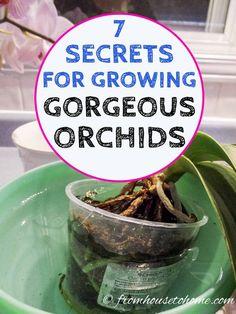Orchids In Water, Indoor Orchids, Orchids Garden, Garden Plants, Sun Garden, Flowers Garden, Plants In Pots, Garden Stakes, Fruit Garden