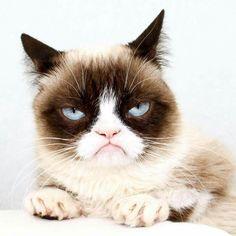 Love me some Grumpy Cat!!!  #TeamGrumpy!!