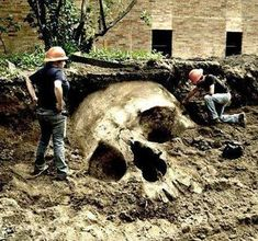 OVER 1000 Giant skeleton have been found in recent years.part 2. | Conspiracy Theories