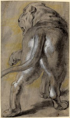 Peter Paul Rubens, Lioness, a drawing - Flanders, AD 1613/15 - This is a magnificent drawing in both scale and style. It is drawn in black and yellow chalk, though Rubens also used a grey wash and some white heightening in order to bring the animal to life on paper.