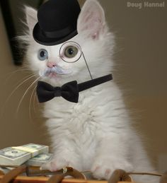 Fancy Cat | Doug Hanna's Blog