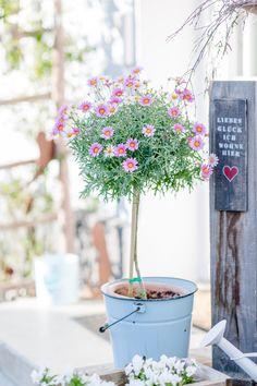 Gartenzauber im April, Pomponetti, Eingang