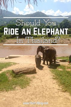 Should you ride an elephant in Thailand? Practical tips for your trip to Southeast Asia.