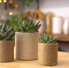 DIY Enjoyable Tin Can Planters - Unique Balcony & Garden Decoration and Easy DIY. - DIY Enjoyable Tin Can Planters – Unique Balcony & Garden Decoration and Easy DIY Ideas The Effect - Rope Crafts, Diy Home Crafts, Diy Home Decor, House Plants Decor, Plant Decor, Cactus Decor, Cactus Art, Cactus Plants, Diy Home Accessories