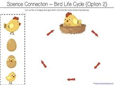 Counting is for the Birds Kindergarten Literature Unit Printables - 1 1 Kindergarten Homeschool Curriculum, Preschool Class, Homeschool Kindergarten, Free Preschool, Bird Life Cycle, Childcare Activities, Sequencing Activities, Chicken Life, Farm Theme