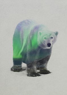 'Aurora Borealis Series: Polar Bear' by Andreas Lie Graphic Art on Wrapped Canvas Bear Graphic, Graphic Art, Graphic Design, Art D'ours, Polar Bear Tattoo, Framed Art Prints, Canvas Prints, Poster Prints, Bear Tattoos