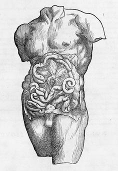 Andreas Vesalius: De humani corporis fabrica (53.682)   Heilbrunn Timeline of Art History   The Metropolitan Museum of Art