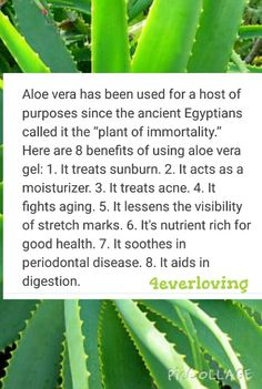 Forever Living Products, How To Treat Acne, Aloe Vera Gel, Benefit, How To Find Out, Moisturizer, Language, Retail, Store