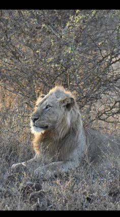 Incontri Safari