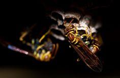 💡 Nature summer yellow animal - download photo at Avopix.com for free    ▶ https://avopix.com/photo/49145-nature-summer-yellow-animal    #sax #wind instrument #brass #cornet #music #avopix #free #photos #public #domain