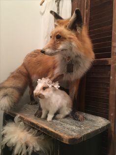 Felt Dogs, Shabby Chic, Fox, Animals, Chic, Animales, Animaux, Foxes, Animal
