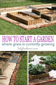 Do you want to turn your lawn into a productive vegetable garden? Let me show you how you can easily do that in five simple steps. Here is how to start a garden where grass is currently growing! #vegetablegarden #howtostartagarden #turnyourlawntogarden #organicgardening #gardeningforbeginners #growyourownfood
