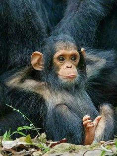 Apes Together Strong Callmecarson