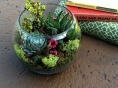 succulents in uncovered terrarium - Google Search