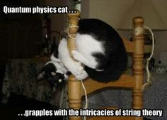 Quantum physics cat grapples with the intricacies of string theory. Funny Cat Captions, Funny Pictures With Captions, Funny Animal Pictures, Funny Dogs, Funny Animals, Animal Captions, Funny Kitties, Animal Funnies, Animal Jokes