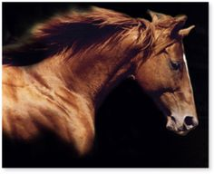Affirmed (February 21, 1975 – January 12, 2001) was an American Thoroughbred racehorse who was the eleventh winner of the United States Triple Crown of Thoroughbred Racing. Affirmed was also known for his famous rivalry with Alydar, whom he met ten times, including in all three Triple Crown races.