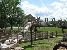 Great for keeping goats exercised and healthy - #goatvet  Google Image Result for http://www.appleberryorchard.com/images/goat-ramp.jpg
